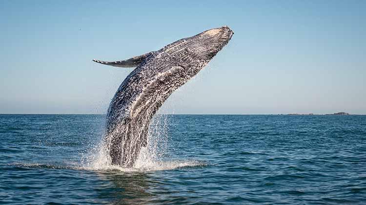 Norwegian Fjords and Whales Safari
