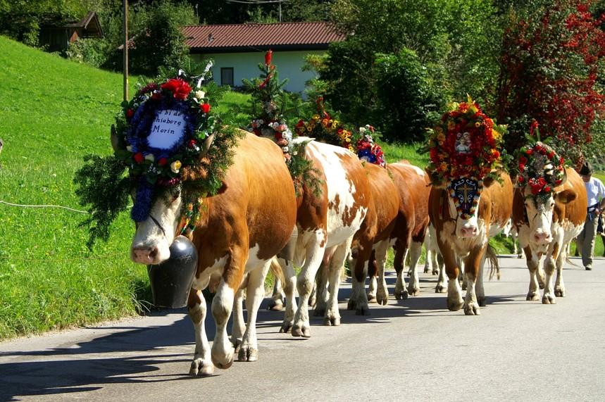 Mayrhofen Almatrieb
